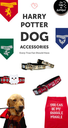 14 Unique Harry Potter Dog Accessories Every True Fan Should Have