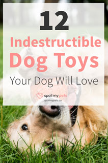 12 Most Indestructible Dog Toys Your Dog Will Love