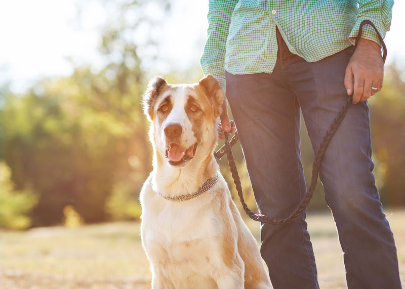 Top 10 Dog Leashes in 2019