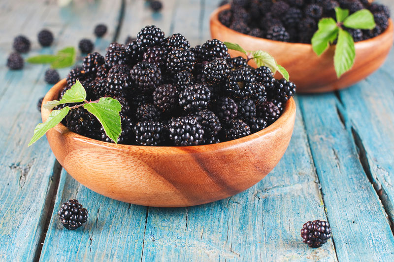 Can Dogs Have Blackberries? - The Powerful Benefits of Berries