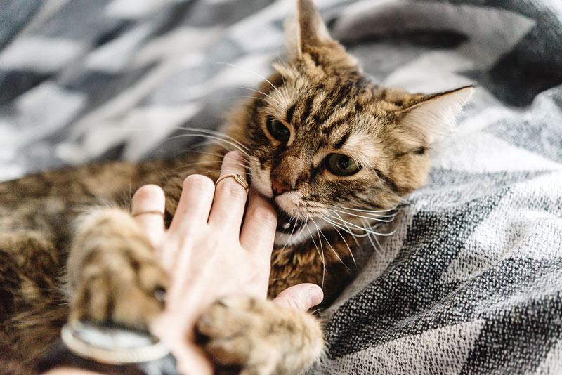 How to Train a Cat Not to Bite in 9 Easy Steps