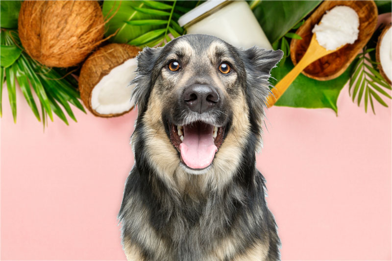 Key Benefits of Coconut Oil for Dogs