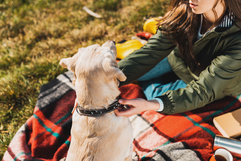 10 Cool Dog Collars for a Stylish Pup