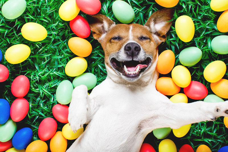 10 Must-Have Items for Your Dog's Easter Basket