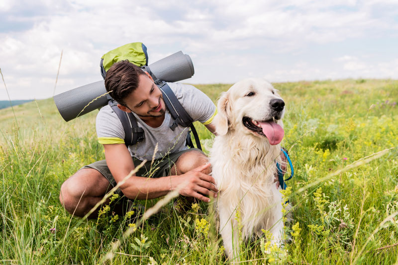 The Ultimate Hiking Gear for Dogs