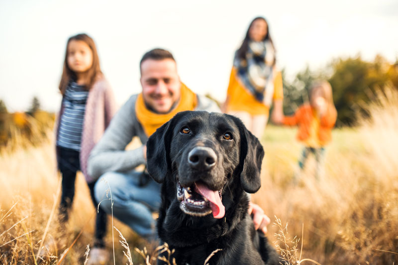 10 Friendliest Dog Breeds that are Great for Families