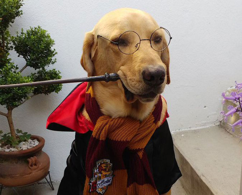 14 Unique Harry Potter Dog Accessoriess