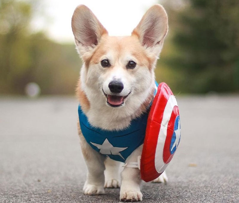 Marvel Dog Accessories