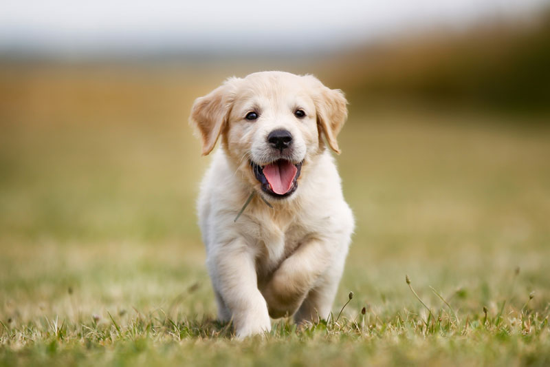 8 Things You Need for a Puppy